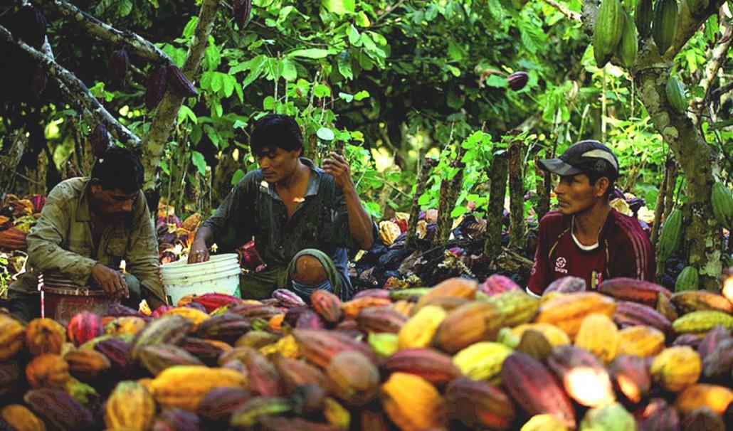 forestfinance-kakaoernte_peru_klein.800x0