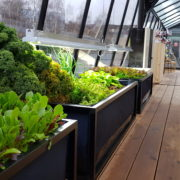 Denn Rucola, Erdbeeren und Koriander wachsen auch vertikal...